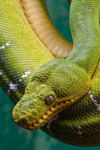Houston Zoo  - Reptile House