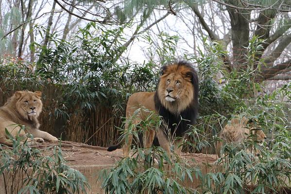 Zoo Feb 2016