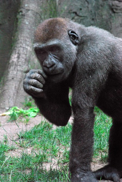 Bronx-Zoo 189-B