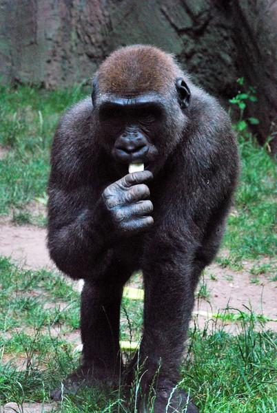 Bronx-Zoo 193-B