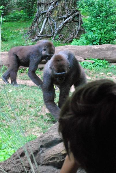 Bronx-Zoo 178-B