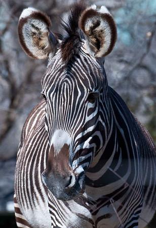 Zoo Photography Class