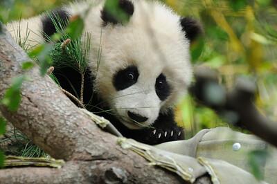 "Zhen Zhen (""Precious"")"