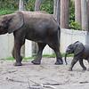 Tuluba mit Mutter