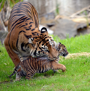 Leanne and her cub