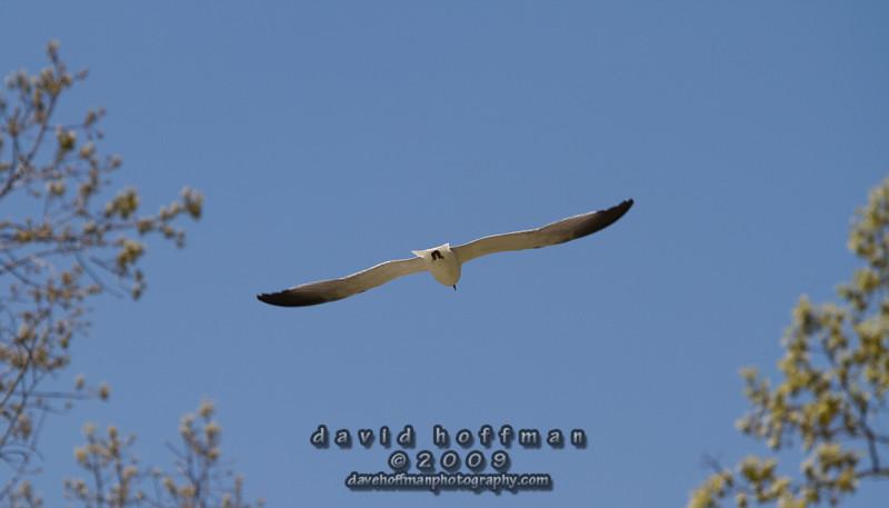 Cape May Zoo-16
