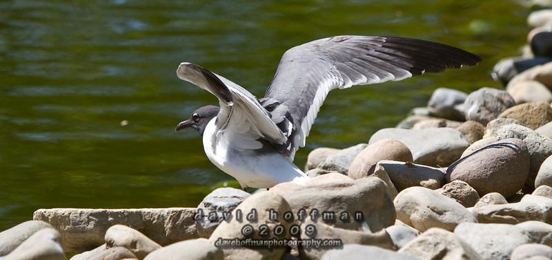 Cape May Zoo-18