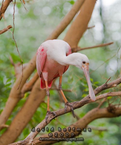 Cape May Zoo-12