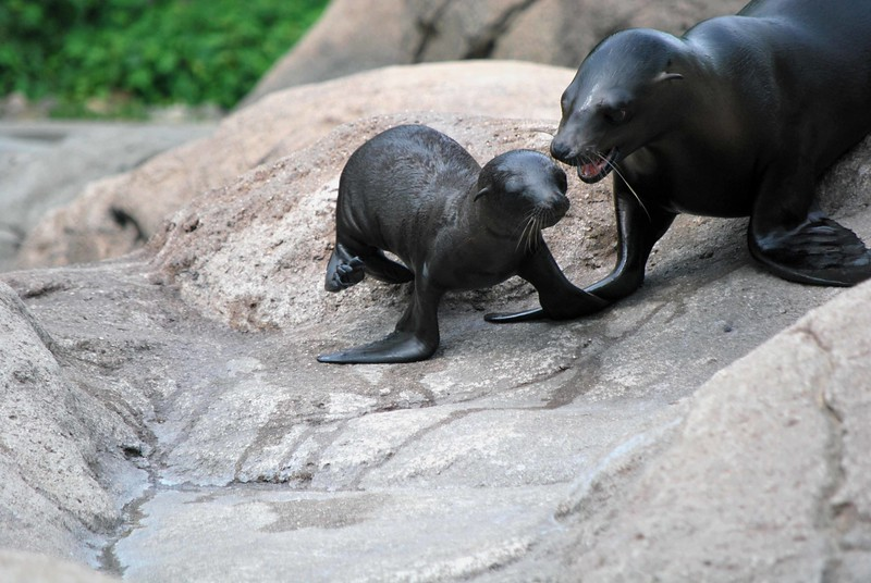 Bronx-Zoo 410-B