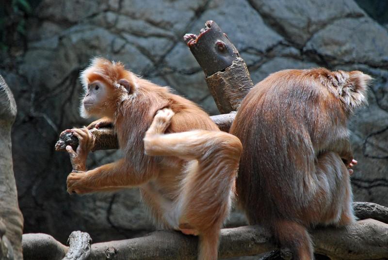 Bronx-Zoo 091-B