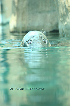Seal<br /> © Pamela Stover<br /> Exposed Images