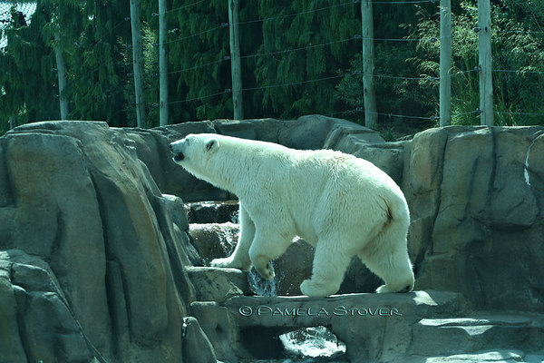 Bear<br /> © Pamela Stover<br /> Exposed Images