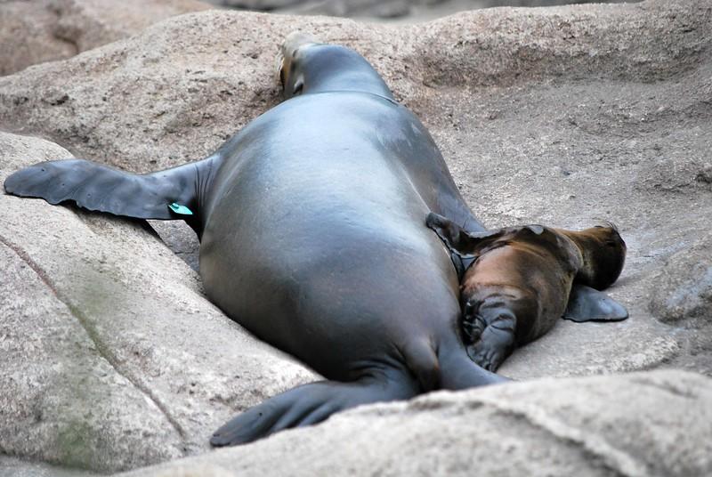 Bronx-Zoo 533-B