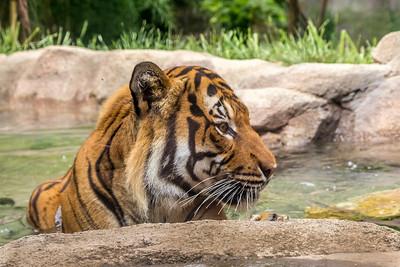 Zoo_Cincinnati