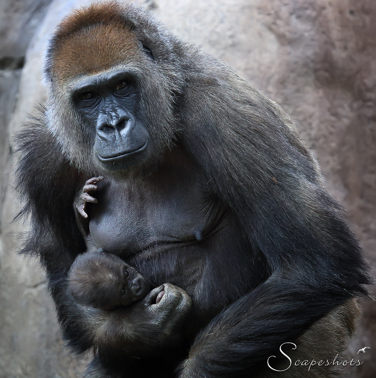 IMAGE: http://www.scapeshots.com/Animals/ZooSafariPark/i-QWWFBXT/0/XL/img_0078_mod-XL.jpg