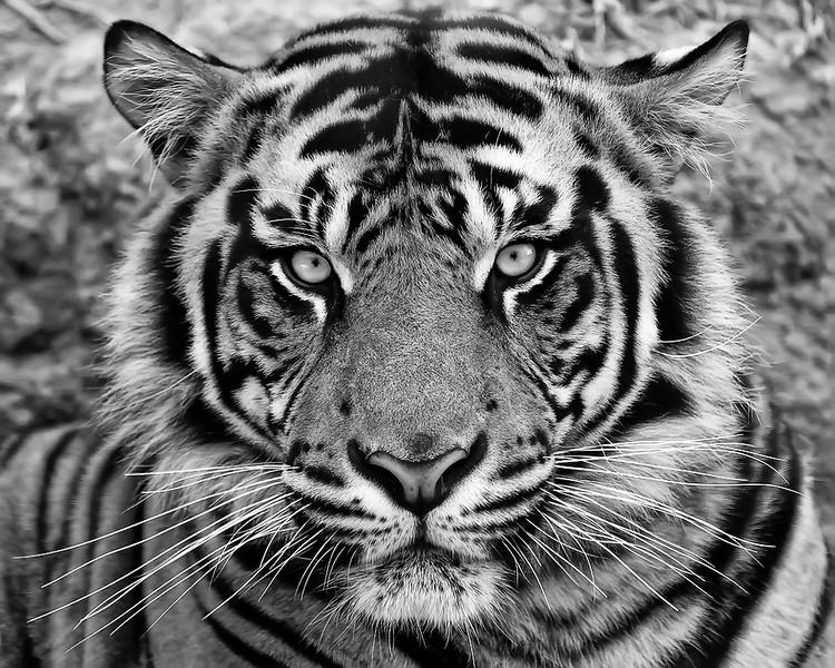 IMAGE: http://www.scapeshots.com/Animals/ZooSafariPark/i-cXq82Qd/0/L/img_6664_mod-L.jpg