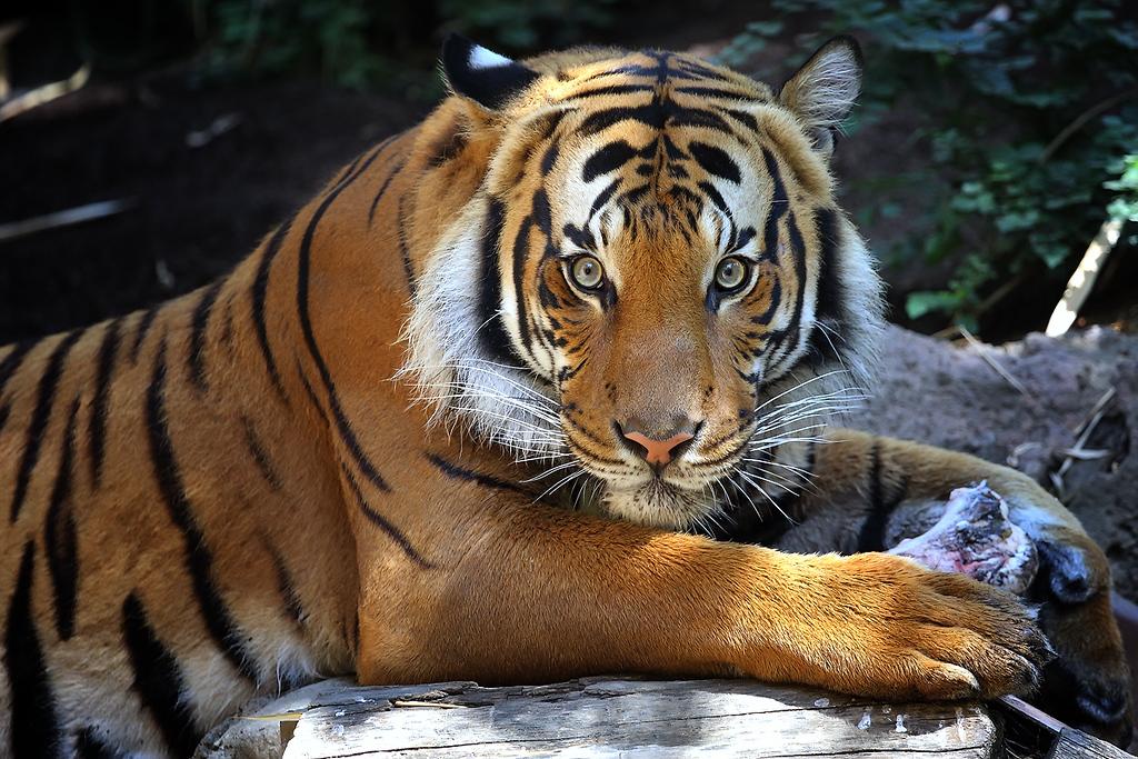 IMAGE: http://www.scapeshots.com/Animals/ZooSafariPark/i-jMhLn7F/0/XL/img_3762_1-XL.jpg