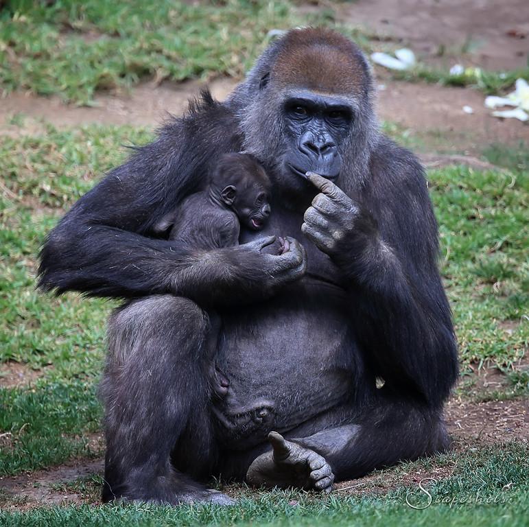 IMAGE: http://www.scapeshots.com/Animals/ZooSafariPark/i-sGKkkkp/0/XL/IMG_0196_mod2-XL.jpg