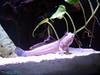 A climbing fish