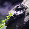 its a frog but really looks like a pile of poo