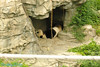the Daddy panda