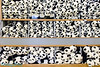 wall of panda