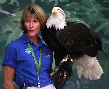 Oregon Zoo Bald Eagle  Keeper (30998497)