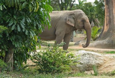 Bobby's Pics Zoo Miami 12-10