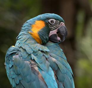 Brevard Zoo 11-19-15