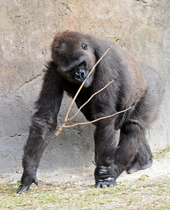 Zoo Miami 12-10