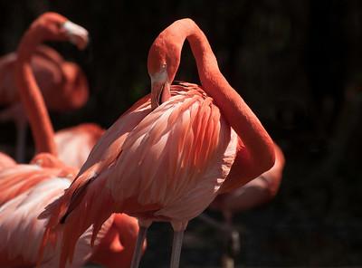 Zoo Miami 2-14