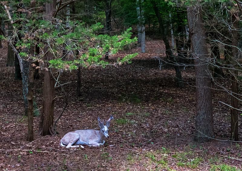Cape May County Zoo - 2018