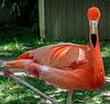 Cape May County Zoo- 2021
