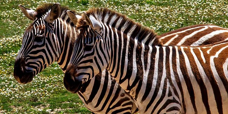 Cape May County Zoo - 2015