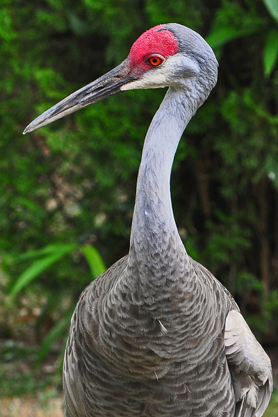 Cape May Zoo - 2011