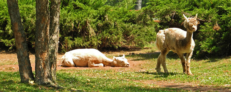 Lehigh Valley Zoo - 2012
