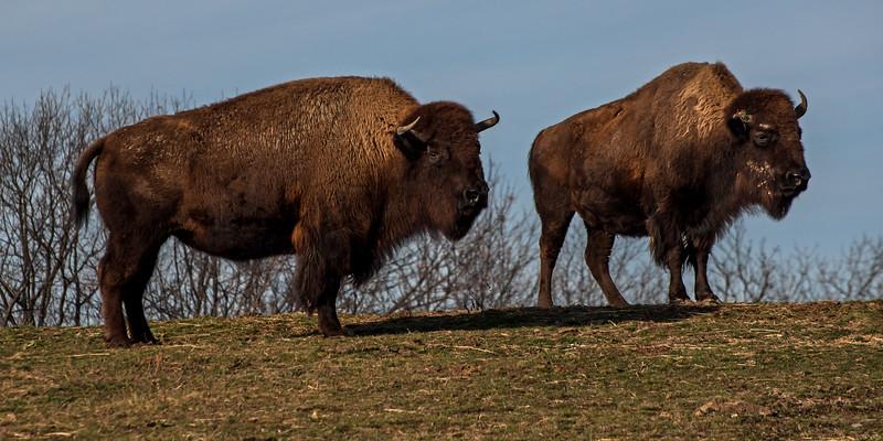 Trexler Nature Preserve - Lehigh County, PA - 2016