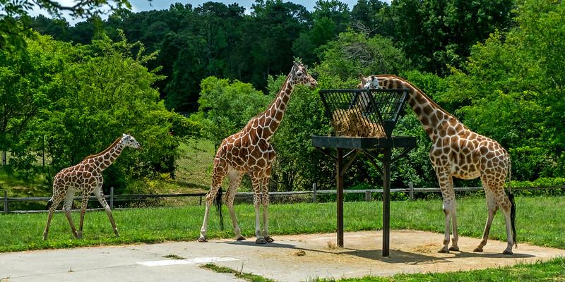 Cape May County Zoo - 2016
