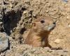 Lehigh Valley Zoo - Schnecksville, PA - 2012