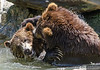 20130612_Bronx Zoo_322-Edit