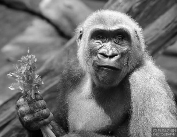 20130612_Bronx Zoo_737-Edit