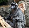 20130612_Bronx Zoo_993