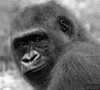 20130612_Bronx Zoo_785-Edit-2-2