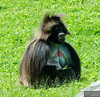 20130612_Bronx Zoo_228