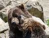 20130612_Bronx Zoo_369