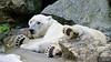 20130612_Bronx Zoo_174