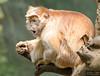 20130612_Bronx Zoo_961