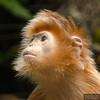 20130612_Bronx Zoo_913