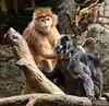 20130612_Bronx Zoo_1010