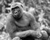 20130612_Bronx Zoo_673-Edit